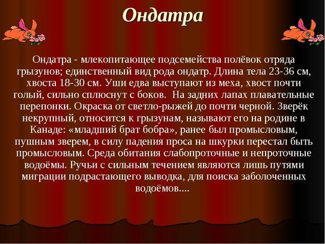 Ондатра Ондатра - млекопитающее подсемейства полёвок отряда грызунов; единств...