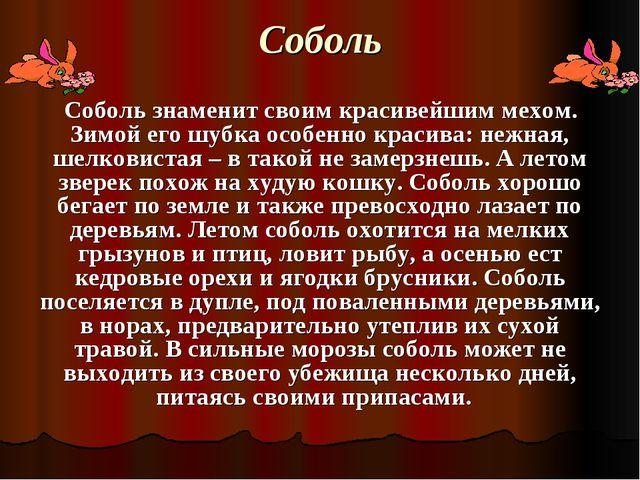 Соболь Соболь знаменит своим красивейшим мехом. Зимой его шубка особенно крас...
