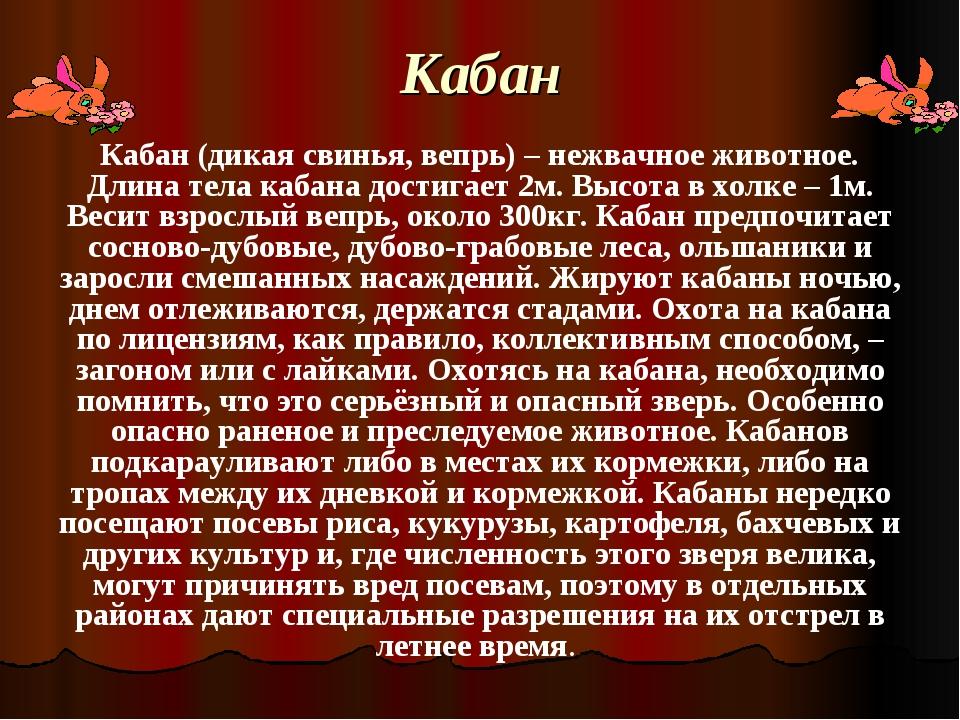 Кабан Кабан (дикая свинья, вепрь) – нежвачное животное. Длина тела кабана дос...