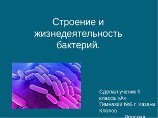 Строение и жизнедеятельность бактерий. Сделал ученик 5 класса «А» Гимназии №6