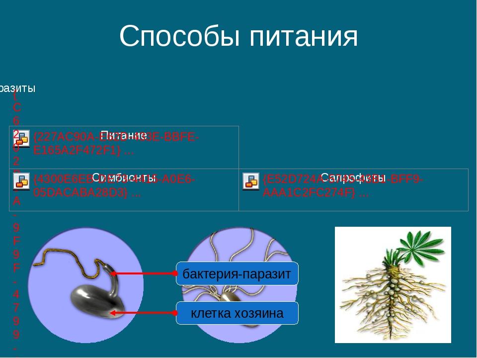Способы питания клетка хозяина бактерия-паразит