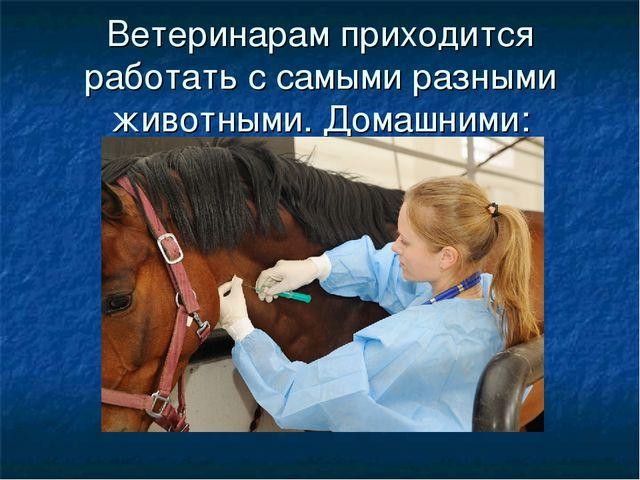 Ветеринарам приходится работать с самыми разными животными. Домашними: