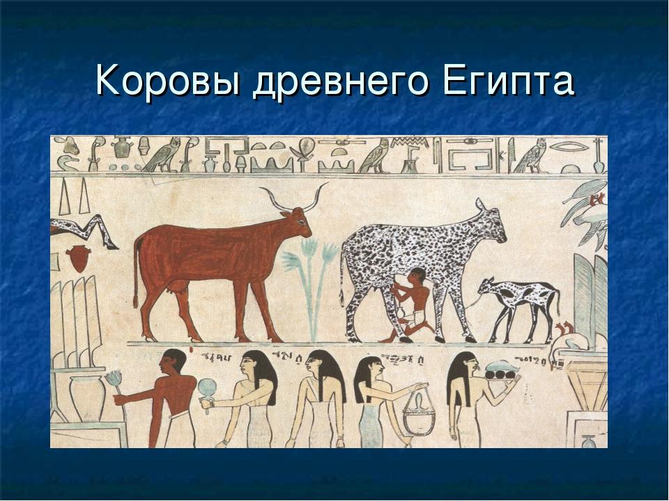 Коровы древнего Египта