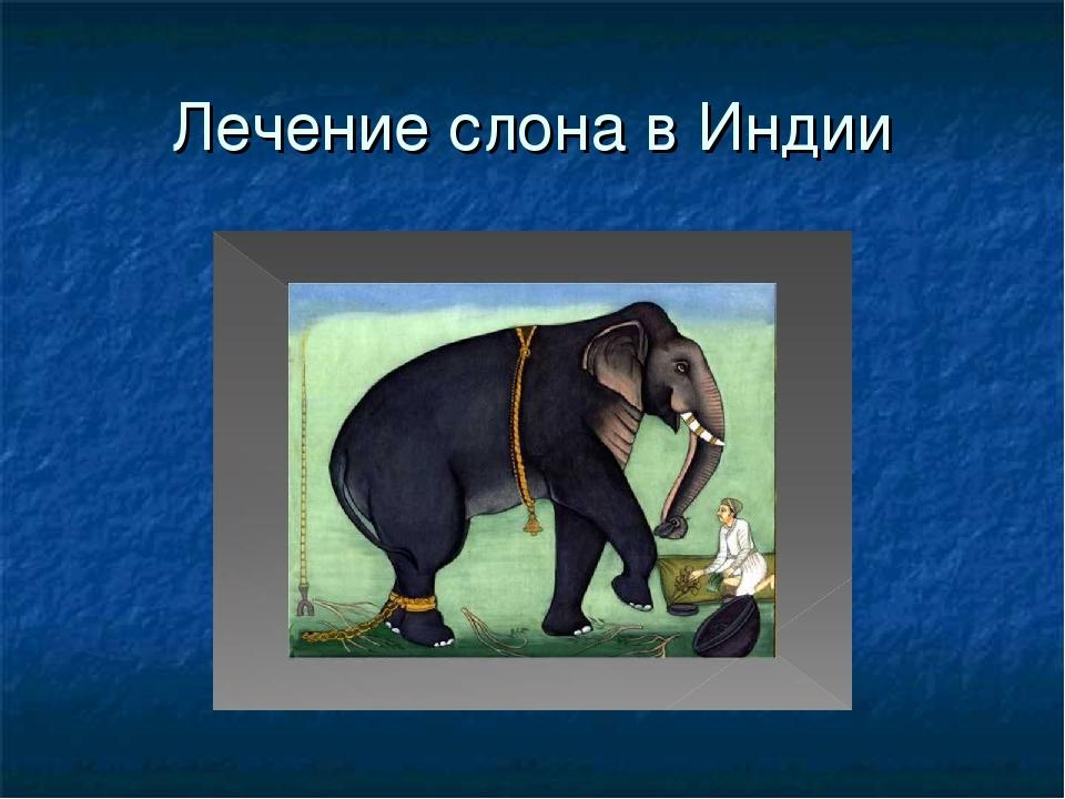 Лечение слона в Индии