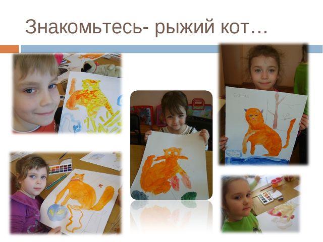 Знакомьтесь- рыжий кот…
