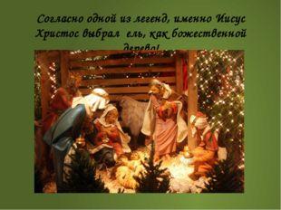 Согласно одной из легенд, именно Иисус Христос выбрал ель, как божественной д