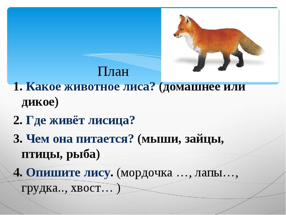 1. Какое животное лиса? (домашнее или дикое) 2. Где живёт лисица? 3. Чем она...