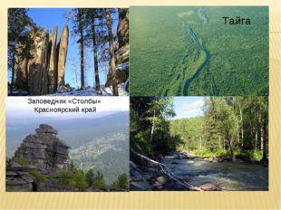Заповедник «Столбы» Красноярский край Тайга Тайга Тайга Тайга