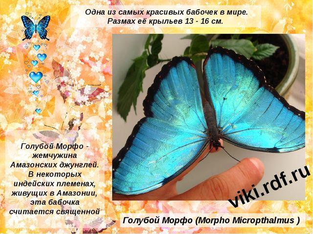 Голубой Морфо (Morpho Micropthalmus ) Голубой Морфо - жемчужина Амазонских дж...