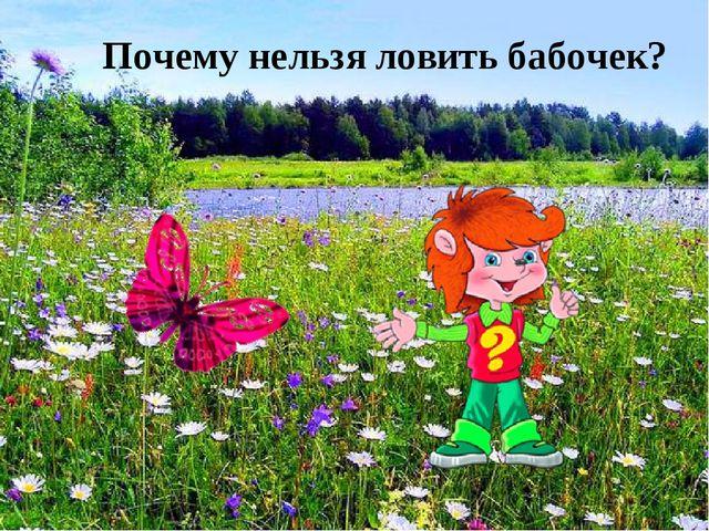 Почему нельзя ловить бабочек?