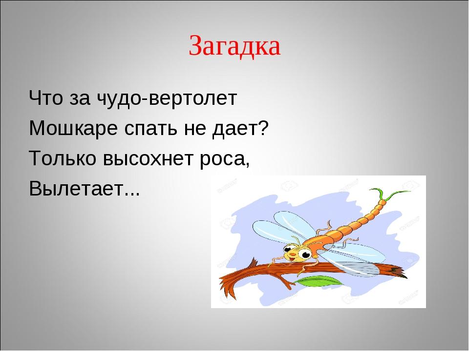 отдыхали стихи про стрекозу самое главное, честные