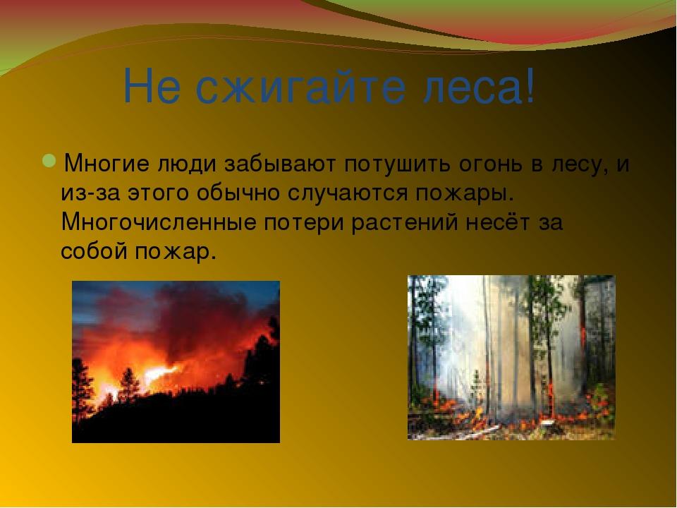 Не сжигайте леса! Многие люди забывают потушить огонь в лесу, и из-за этого...