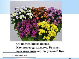 Он последний из цветов Кто цветет до холодов, Бутоны красками играют, Ты уга