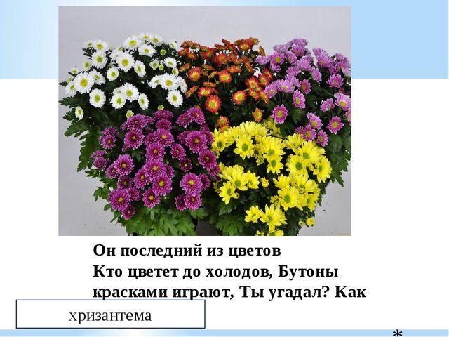 Он последний из цветов Кто цветет до холодов, Бутоны красками играют, Ты уга...