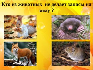 Кто из животных не делает запасы на зиму ?