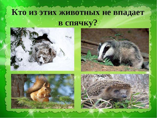 Кто из этих животных не впадает в спячку?