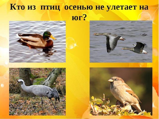 Кто из птиц осенью не улетает на юг?