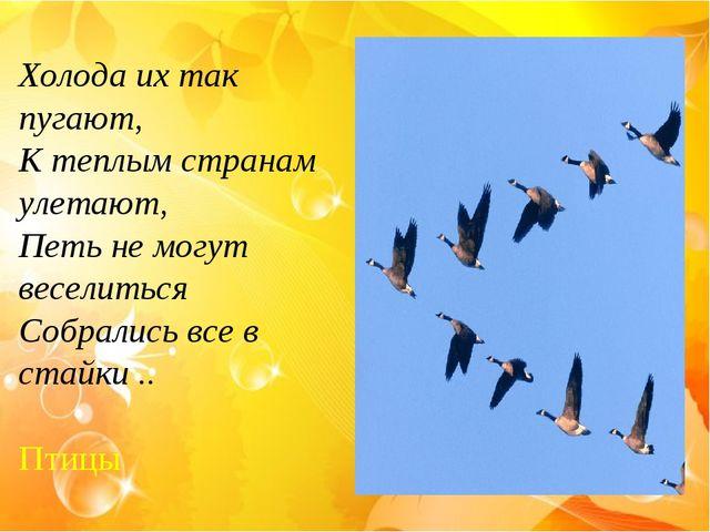 Холода их так пугают, К теплым странам улетают, Петь не могут веселиться Собр...