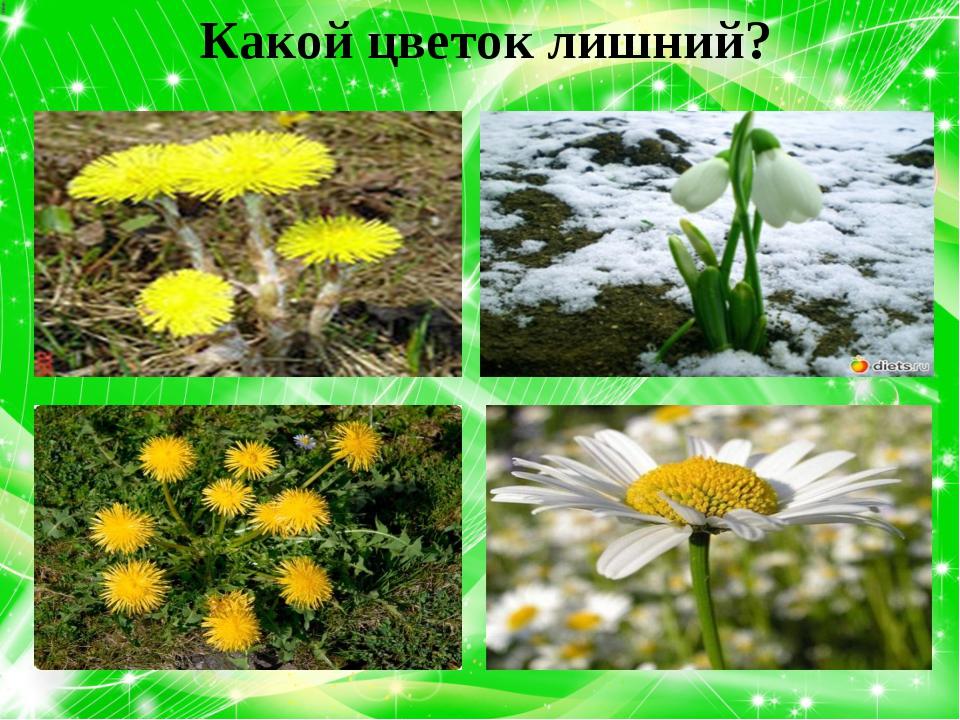 Какой цветок лишний?
