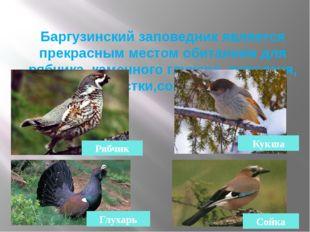 Баргузинский заповедник является прекрасным местом обитанием для рябчика, кам