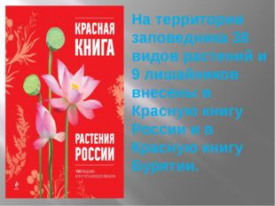 На территории заповедника 38 видов растений и 9 лишайников внесены в Красную