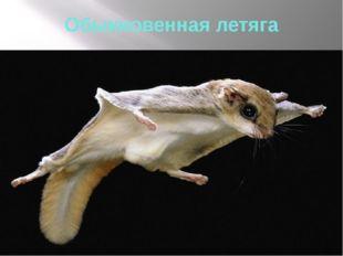 Обыкновенная летяга