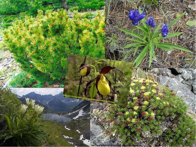 На территории заповедника найдено 132 вида грибов, 212 видов лишайников, 1241...