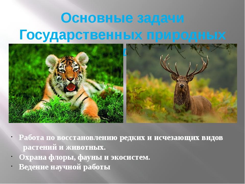 Основные задачи Государственных природных заповедников Работа по восстановлен...