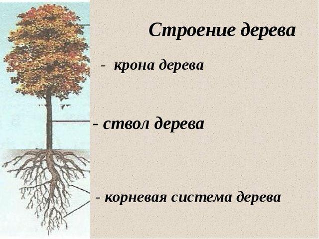 - корневая система дерева - ствол дерева - крона дерева Строение дерева