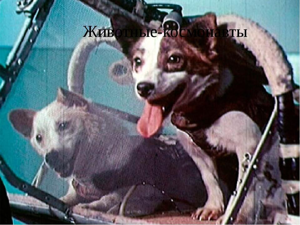 Животные-космонавты