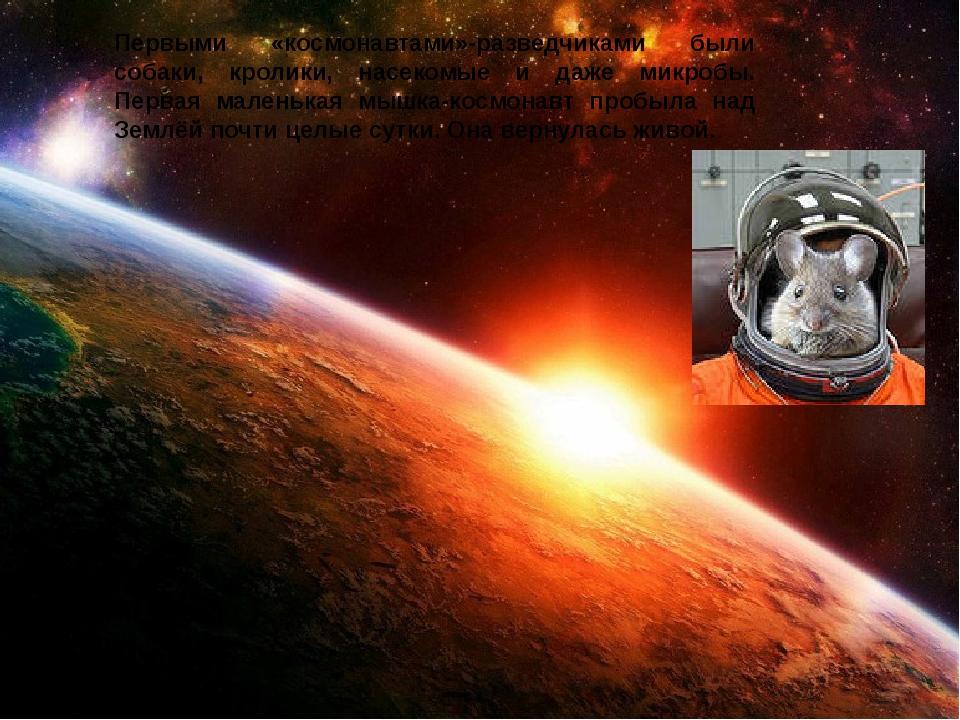 Первыми «космонавтами»-разведчиками были собаки, кролики, насекомые и даже ми...