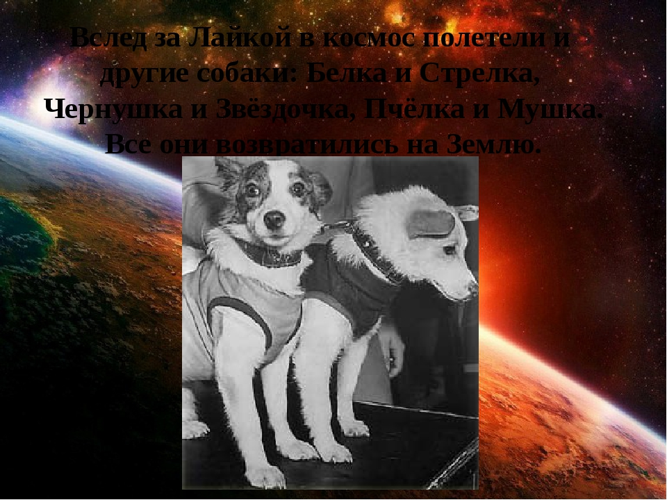 Вслед за Лайкой в космос полетели и другие собаки: Белка и Стрелка, Чернушка...