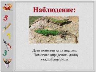 Дети поймали двух ящериц. – Помогите определить длину каждой ящерицы.