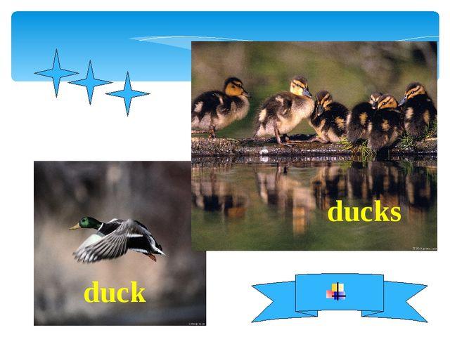 duck ducks
