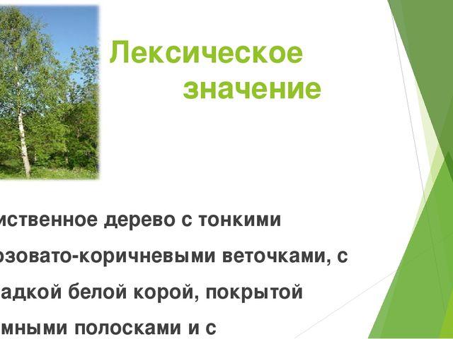 Лексическое значение Лиственное дерево с тонкими розовато-коричневыми веточка...
