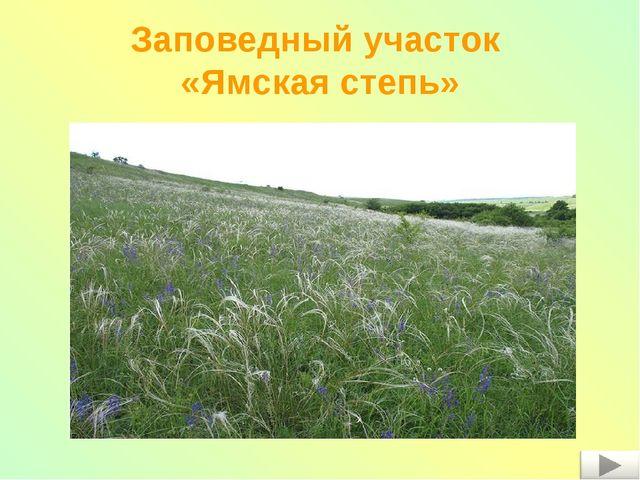 Заповедный участок «Ямская степь»