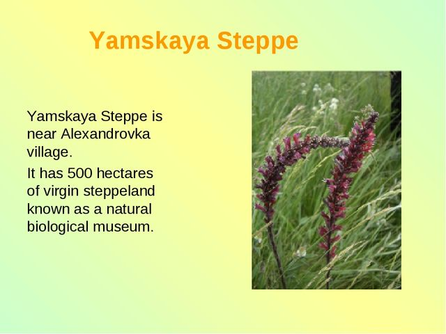Yamskaya Steppe Yamskaya Steppe is near Alexandrovka village. It has 500 hec...