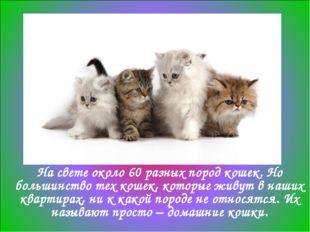 На свете около 60 разных пород кошек. Но большинство тех кошек, которые живут