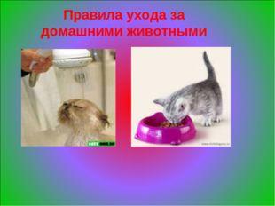 Правила ухода за домашними животными