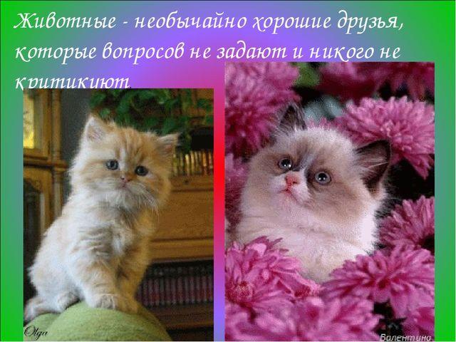 Животные - необычайно хорошие друзья, которые вопросов не задают и никого не...