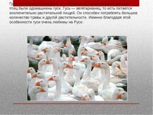 Гуси. Историки утверждают, что первыми из сельскохозяйственных птиц были одом