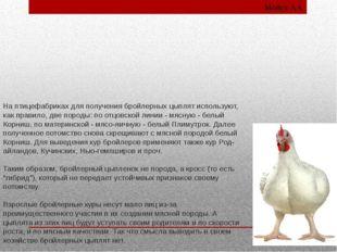 На птицефабриках для получения бройлерных цыплят используют, как правило, две