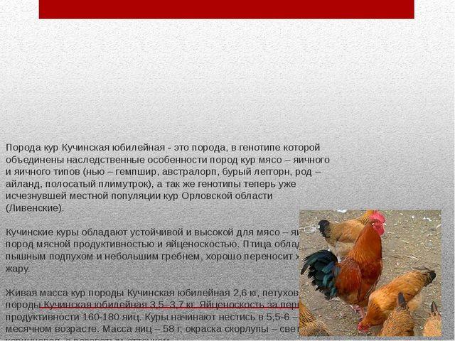 Порода кур Кучинская юбилейная - это порода, в генотипе которой объединены на...