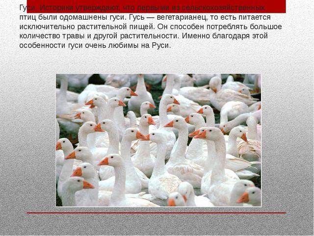 Гуси. Историки утверждают, что первыми из сельскохозяйственных птиц были одом...
