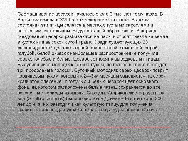 Одомашнивание цесарок началось около 3 тыс. лет тому назад. В Россию завезена...