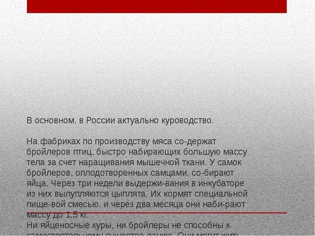 В основном, в России актуально куроводство. На фабриках по производству мяса...
