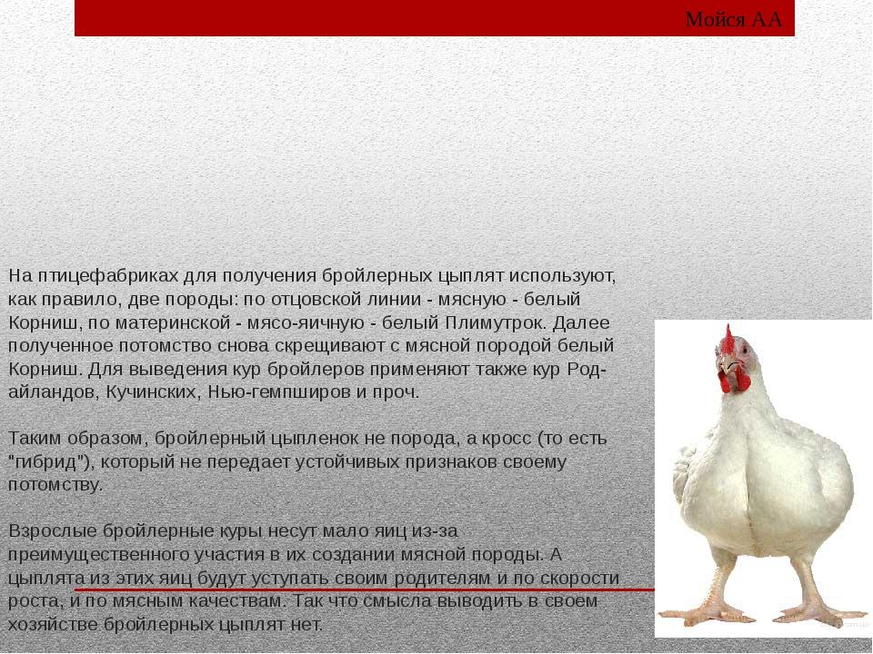 На птицефабриках для получения бройлерных цыплят используют, как правило, две...