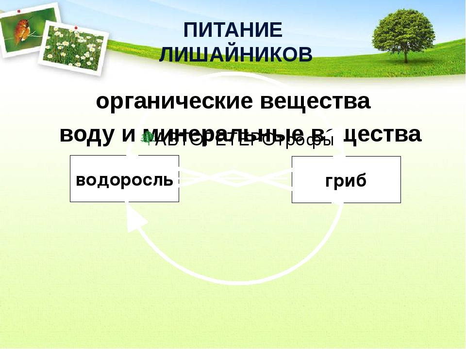 ПИТАНИЕ  ЛИШАЙНИКОВ