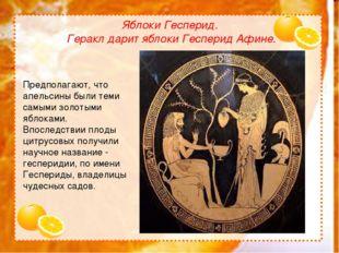 Яблоки Гесперид. Геракл дарит яблоки Гесперид Афине. Предполагают, что апель