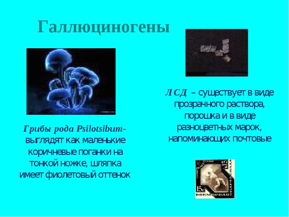Галлюциногены Грибы рода Psilotsibum- выглядят как маленькие коричневые поган...